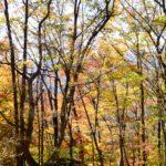 【登山報告】2019.11.10(日)定例山行 奥多摩 御前山